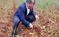 Patates üreticisi sıkıntılı