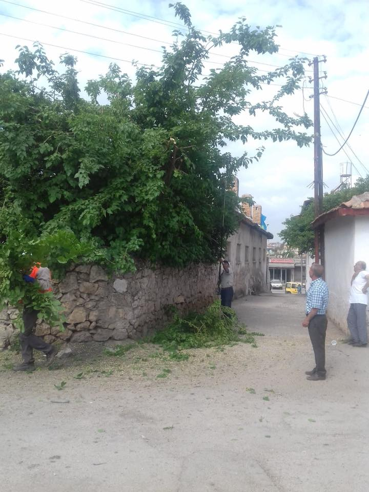 Reyhanlı Belediyesi Şehir Genelindeki Yollara Sarkan Ağaçları Budadı