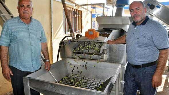 Reyhanlı'da zeytin hasadı başladı