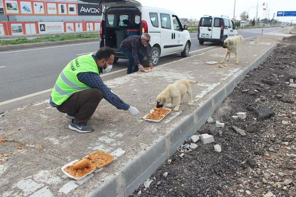 Reyhanlı'da Sokak hayvanlarına yiyecek ve su bırakıldı