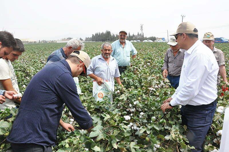 MAY Tohum'un Yeni Pamuk Çeşitleri Bereket Şenliğinde Çiftçilere Sunuldu