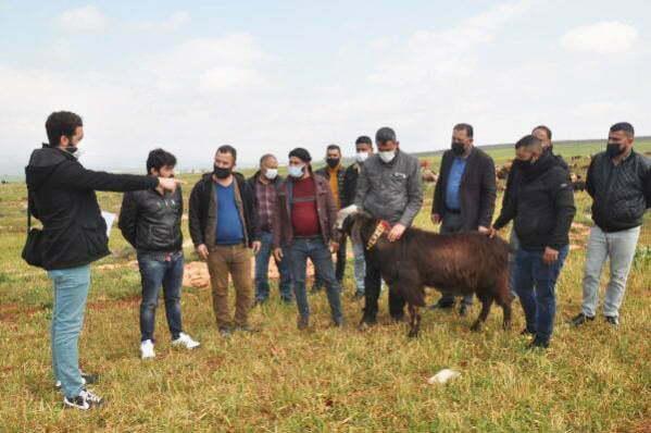 REYHANLI'DA BESİCİLERE SAHADA 'SÜRÜ YÖNETİCİLİĞİ' KURSU